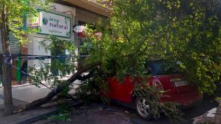Árbol caído por el viento en la calle San Vicente Mártir de Zaragoza.