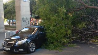 El árbol ha caído en la plaza de San Francisco sobre dos coches aparcados.