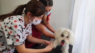 Servicio de peluquería de la Clínica Veterinaria Ohana de Santa Isabel