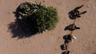 Burros en Burrolandia, en Otumba