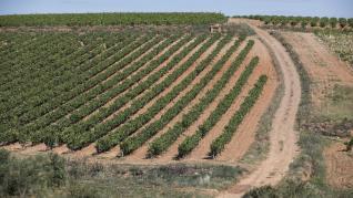 Grandes Vinos y Viñedos riega las estrellas de Aragón