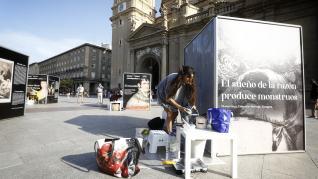 La exposición se completa este sábado y permanecerá en la plaza del Pilar un mes.
