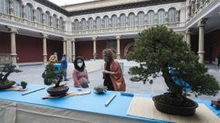 El Museo de Zaragoza acoge una exposición sobre bonsáis
