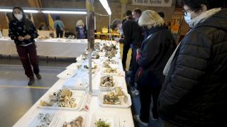Unas 200 variedades de setas se han recolectado en las Jornadas Micológicas de Ayerbe, que ofrece también talleres y conferencias.