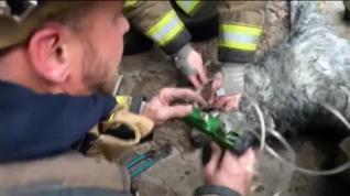 Salvan la vida a un perro al rescatarle de un incendio en Washington