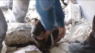 Rescate 'in extremis' de dos cachorros sepultados tras un bombardeo en Siria