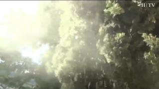 El buen tiempo agrava las alergias y dispara la venta de antihistamínicos