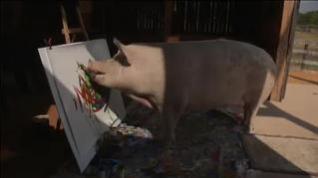 Pigcasso, la cerdita artista