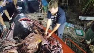 Hallan una ballena muerta en Filipinas con 40 kilos de plásticos en su interior