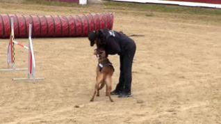 Estella convierte su plaza de toros en una zona de esparcimiento para perros