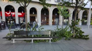 Ramas caídas en Plaza Aragón