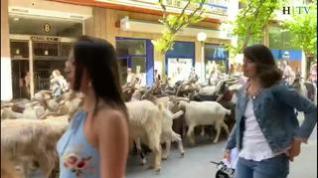 Manifestación en Huesca tras los últimos ataques de animales en Monegros y el Pirineo