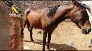 Detenido un hombre en Épila por matar hambre a dos perros y maltratar a un caballo