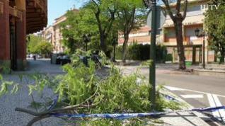Cae una rama de grandes dimensiones en la calle Pignatelli de Zaragoza