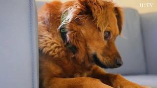 Evitar el mareo en viajes y otros consejos naturales que ayudarán a nuestras mascotas