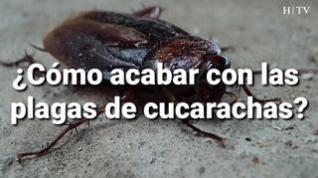 Consejos (eficaces) para acabar con las plagas de cucarachas