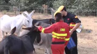 Burros bombero para prevenir incendios en Doñana