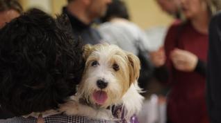 Perros de alerta médica contra la diabetes y la epilepsia buscan familias de acogida.