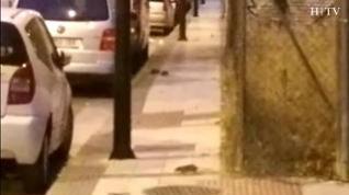 """""""Hay ratas corriendo por la acera en las calles de la Azucarera"""""""