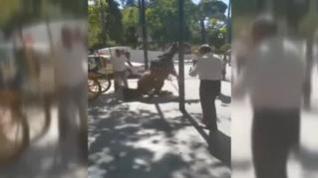 Enfrentamiento entre animalistas y cocheros de Sevilla al desplomarse un caballo en plena calle