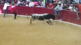 Un herido, caídas y toreros improvisados en la tercera mañana de vaquillas en Zaragoza