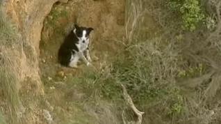 Final feliz para un perro atrapado en un acantilado en Australia