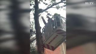 Difícil rescate de un gato en un árbol