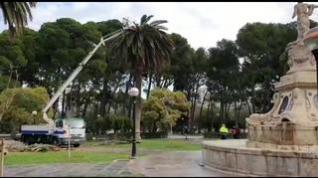 Realizan un tratamiento urgente a algunas palmeras del Parque Grande de Zaragoza