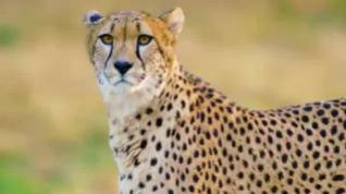 La ONU alerta de la extinción de 150 especies animales al día