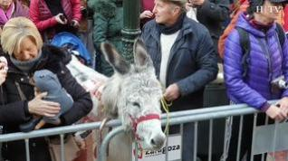 La bendición de los animales en San Antón llena la plaza de San Pablo de Zaragoza de mascotas