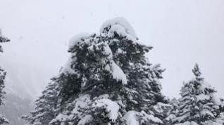 La nieve caída en Llanos del Hospital esta noche incrementa en 10 cm los espesores