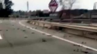 Aparecen decenas de pájaros muertos en los aledaños de la petroquímica de Tarragona