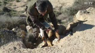 Decenas de 'cazarrecompensas' llegan a Épila para acabar con la plaga de conejos