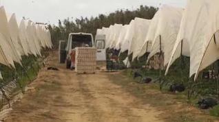 Parados e inmigrantes para recoger las cosechas