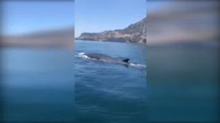 La ausencia del ruido humano atrae a ballenas y delfines hasta las costas