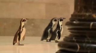 Un trío de pingüinos, de visita el museo de arte de Kansas City