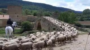 Llegan los primeros ganados trashumantes al Maestrazgo