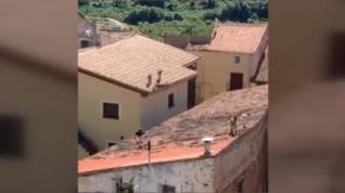 Un grupo de cabras montesas sorprende a los vecinos Villafeliche al saltar sobre sus tejados