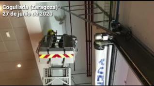 Los Bomberos rescatan un gavilán del interior de un concesionario en Zaragoza