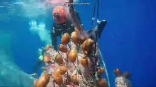 Liberan a una ballena atrapada en una red de pescador ilegal