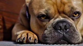 ¿A qué peligros se enfrentan las mascotas por el coronavirus?