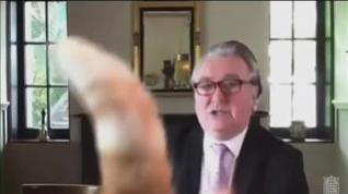 Un gato se cuela en la vídeollamada de un diputado escocés