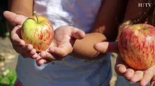 Mitos sobre alimentos: ¿La fructosa de la fruta altera a los niños?