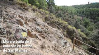 El yacimiento paleontológico de Murero y su relevancia mundial