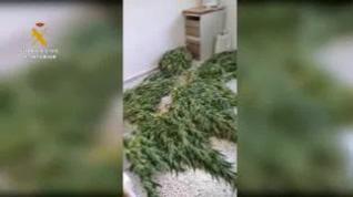 Dos vecinos de Aniñón, investigados por el cultivo de tres plantaciones de marihuana