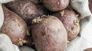 Patatas con brotes... ¡Cuidado! Contienen tóxicos
