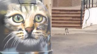 La pantera de Granada podría ser sólo un gato doméstico