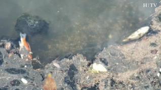 Aparecen cientos de peces muertos flotando en el lago de Montecanal