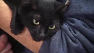 El virus no mató al primer gato infectado por covid-19 en España