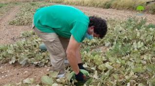 Potenciar la comercialización del melón de Torres de Berrellén, objetivo de Gardeniers